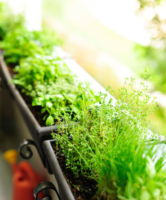 balcony-garden-grow-your-own-by-Healthista.com-