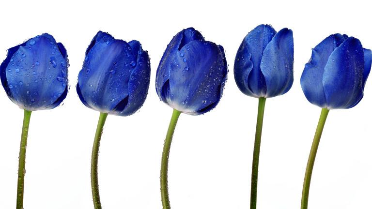 blue tulip, is my vagina normal, healthista
