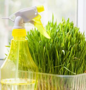 yellow-spray-bottle-growing-your-own-by-Healthista.com