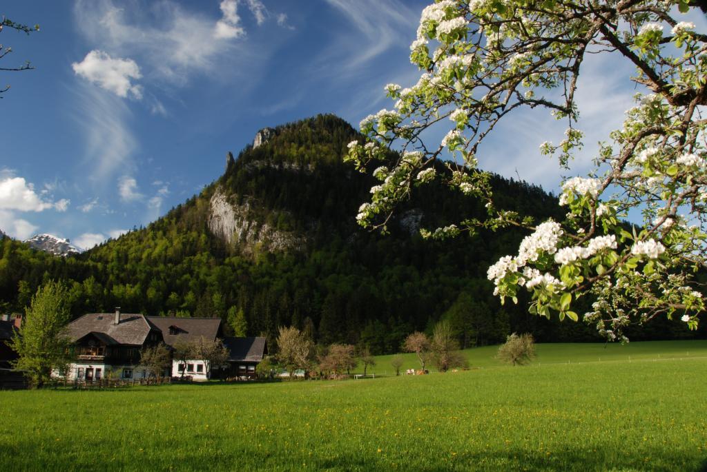 Viva Mayr landscape, Viva Mayr review, by healthista.com