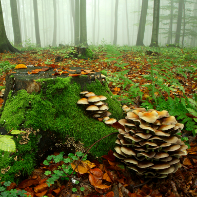 Medicinal mushrooms, by healthista.com