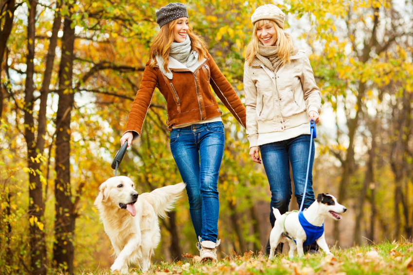 Can our pets reduce stress - 12 ways your pet is boosting your wellbeing woman walking her dog