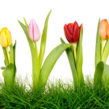 tulip, pfi, is my vagina normal, healthista