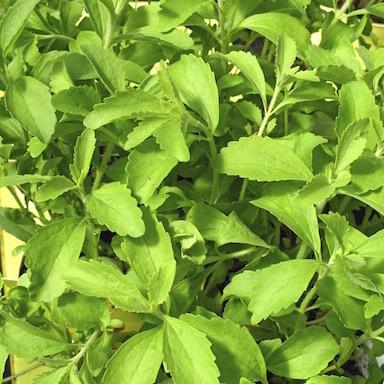 stevia-WE-LOVE-truvia-by-healthista.com