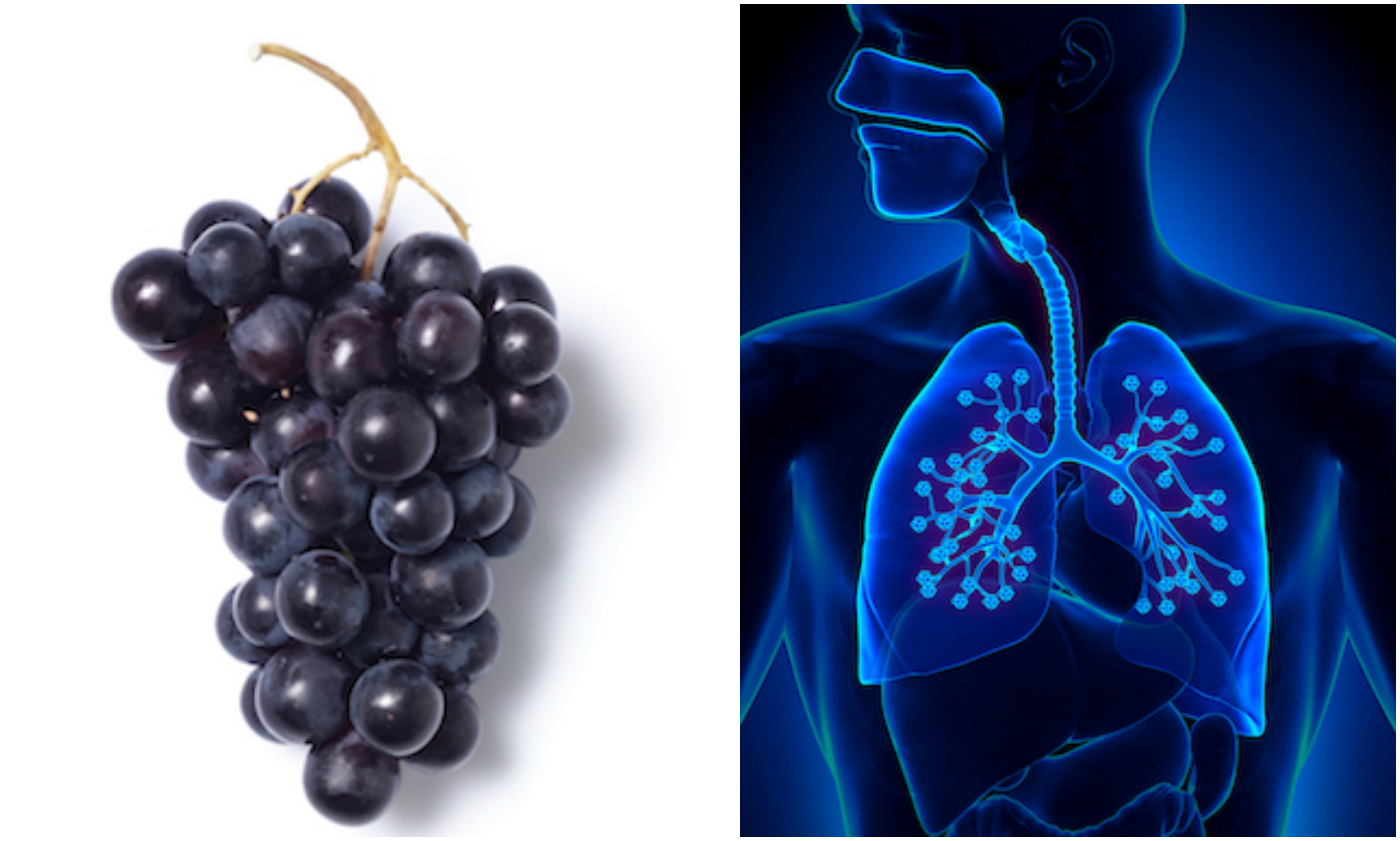 grapes and lungs, foods that look like the body part they're good for, by healthista
