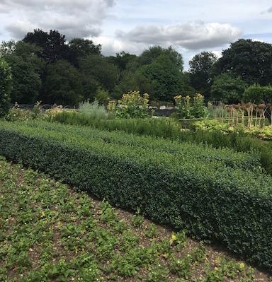 vegetable garden, Raymond Blanc, by healtista.com