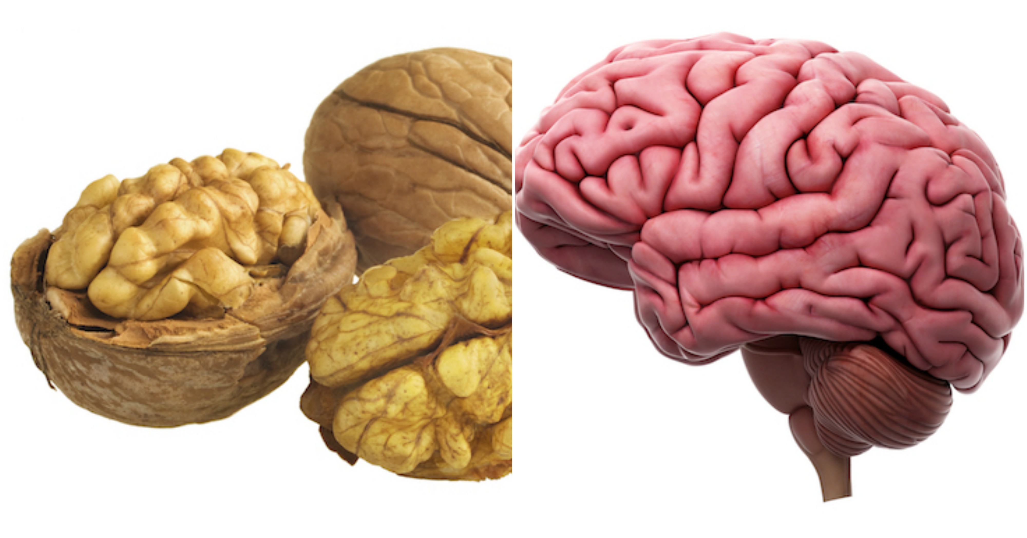 walnut and brain, foods that look like the body part they're good for, by healthista