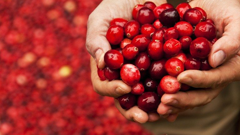 cranberries-top-10-superfoods-by-healthista