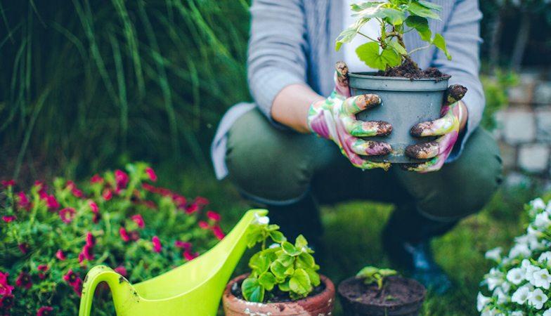 gardening.-how-to-grow.-slider