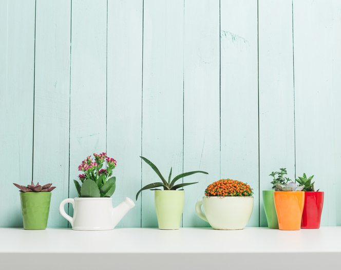 how-to-grow.-planters