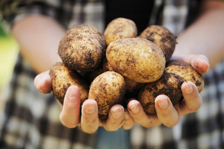 how-to-grow.-potato