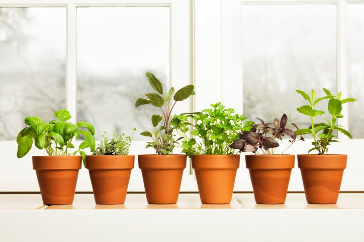 how-to-grow.-potted-herbs