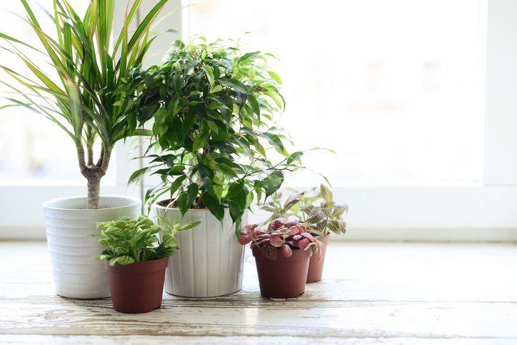 how-to-grow.-window-plants
