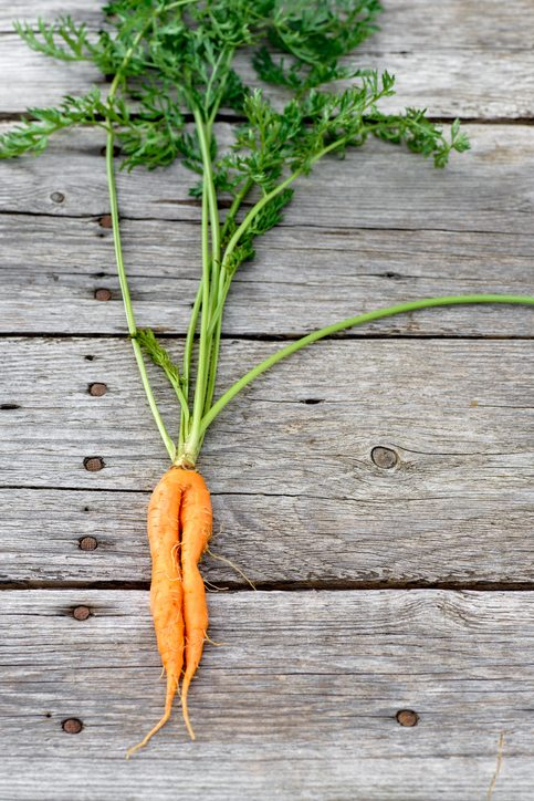 how to grow. wonky carrot