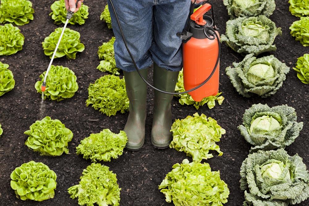 8-items-affecting-fertility-pesticides