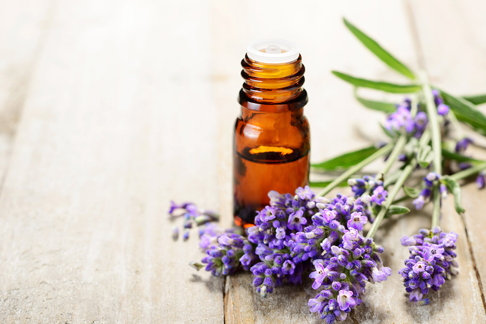 Lavender essential oil treatment headaches migraines
