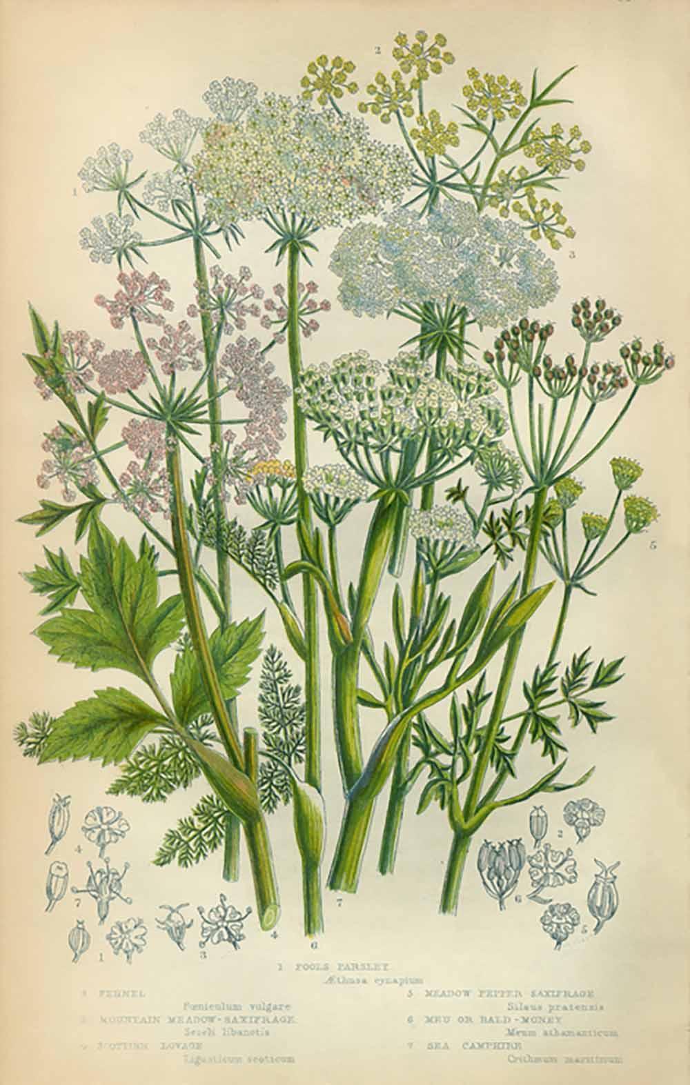 liqourice-herbs-for-health