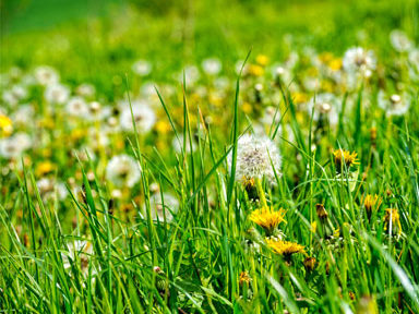 flowers and grass, hay fever, by healthista