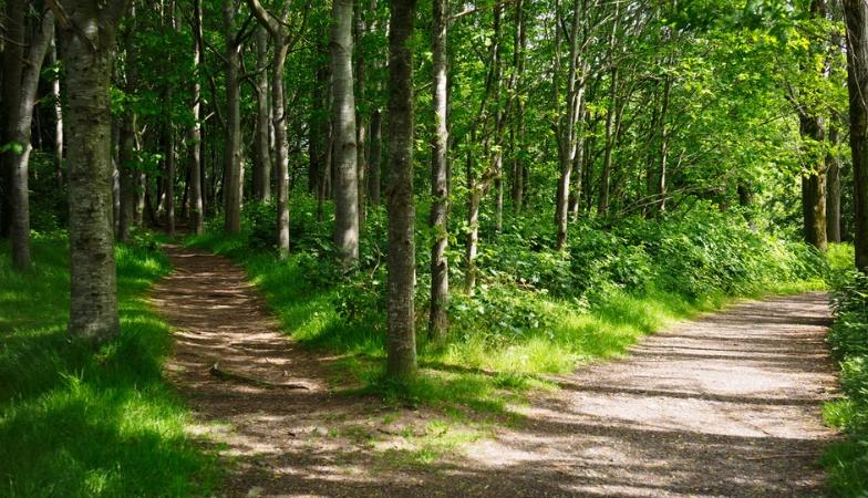 4 steps to a happier life according to the Yogi philosophy of Vedanta path of least harm Ram Banerjee World Yoga Festival Healthista SLIDER