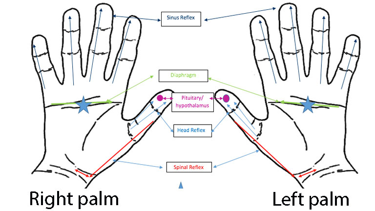 hand-chart,-hand-reflexology-for-blocked-sinuses-and-cold-by-healthista.com