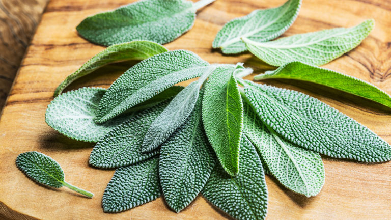 sage,-nutrients-to-boost-immunity-by-healthista.com