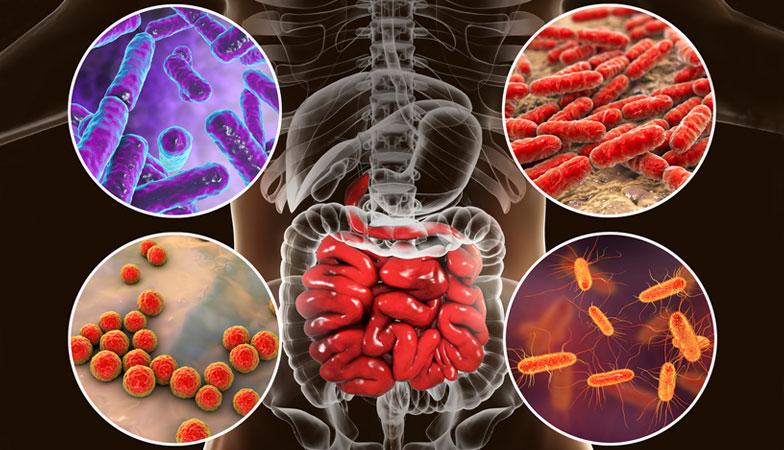 How gut health can help immunity