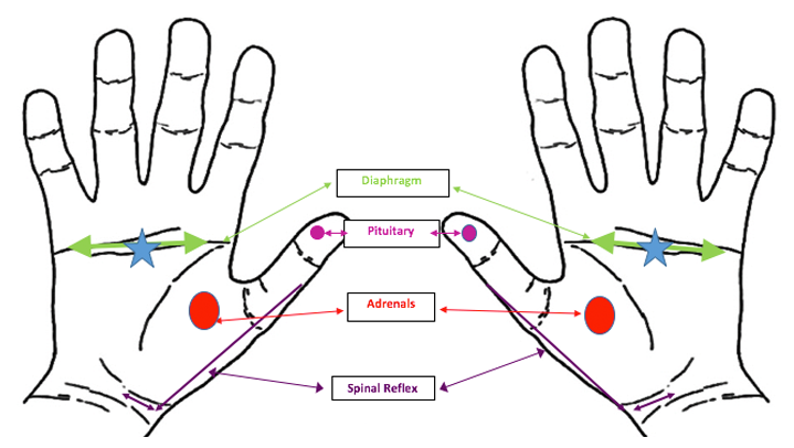hand-chart, how to relieve stress and anxiety with hand reflexology