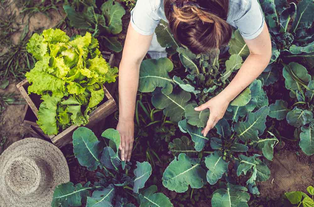 12-tips-to-boost-your-fertility-organic-produce.jpg