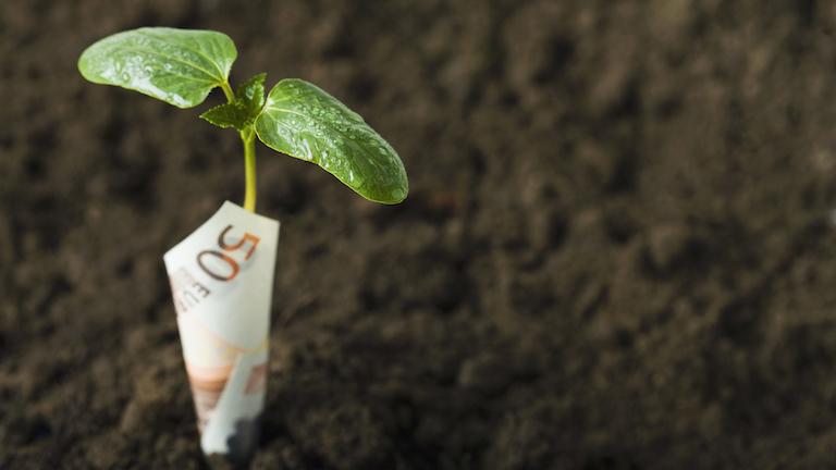 money-plant-health-to-wealth-healthista-pullman-event