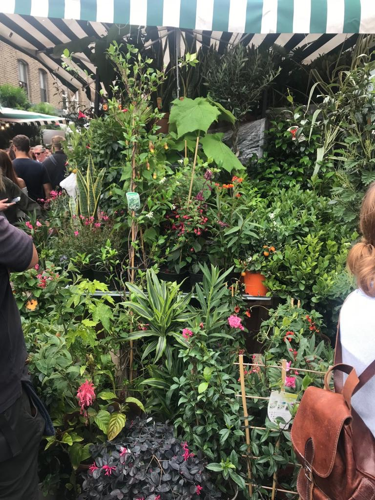 plants charlotte