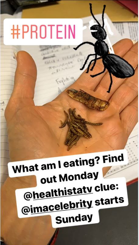 insects insta