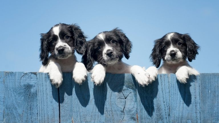 Can our pets reduce stress_ 12 ways your pet is boosting your wellbeing MAIN