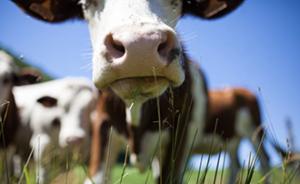 5 reasons to be vegan