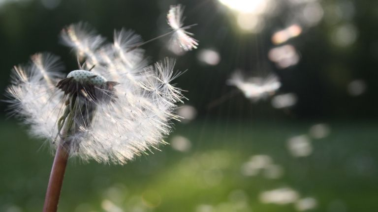Hay fever driving you mad 6 proven natural ways to reduce symptoms MAIN
