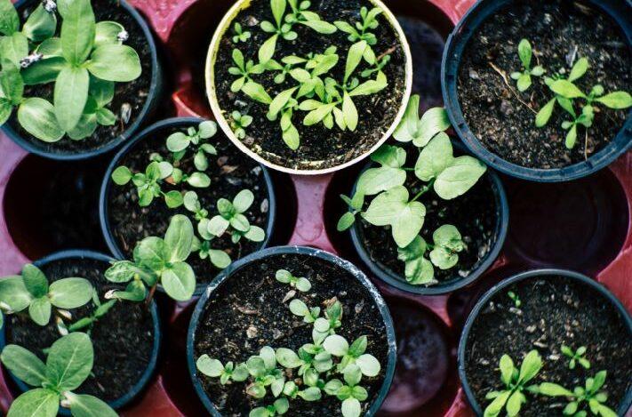endo belly alleviate endometriosis symptoms vegetable garden