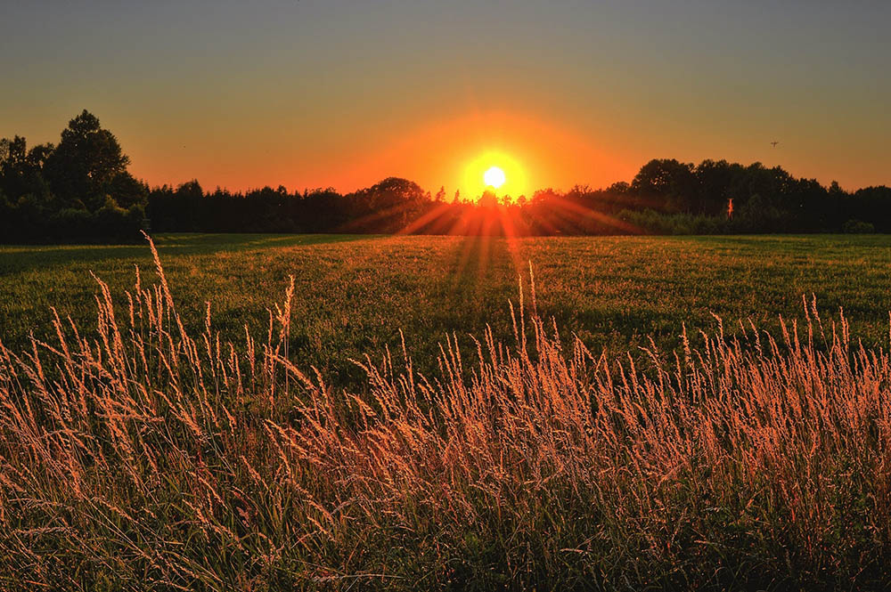 hay fever natural ways to reduce symptoms sunshine